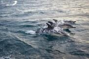 Golfe de Gascogne